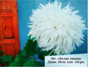Хризантемы из частной коллекции